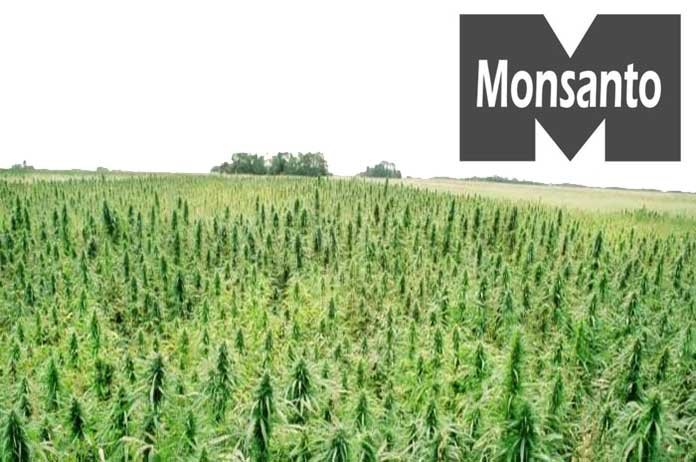 Monsanto and Bayer are Maneuvering to Take Over the Cannabis