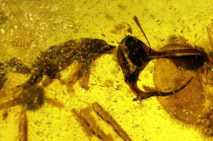 Ancient hell ant with metal horns trap jaw found inside amber