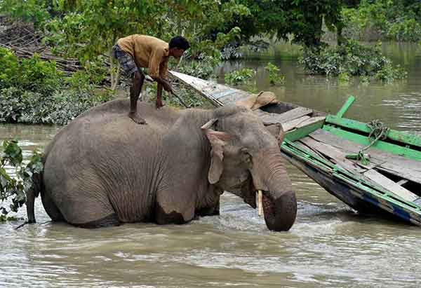 Disturbing Photos Of The Flooding In South Asia No One Is Talking About 7