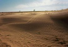 75 of Earth Land Areas Are Degraded