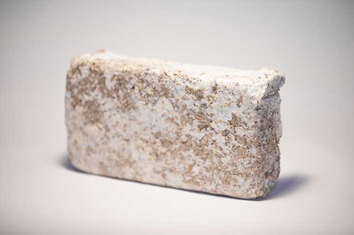 Company Develops Revolutionary Way to Create Leather Wood and Bricks from Mushrooms